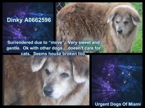 Urgent Dogs of Miami's photo.