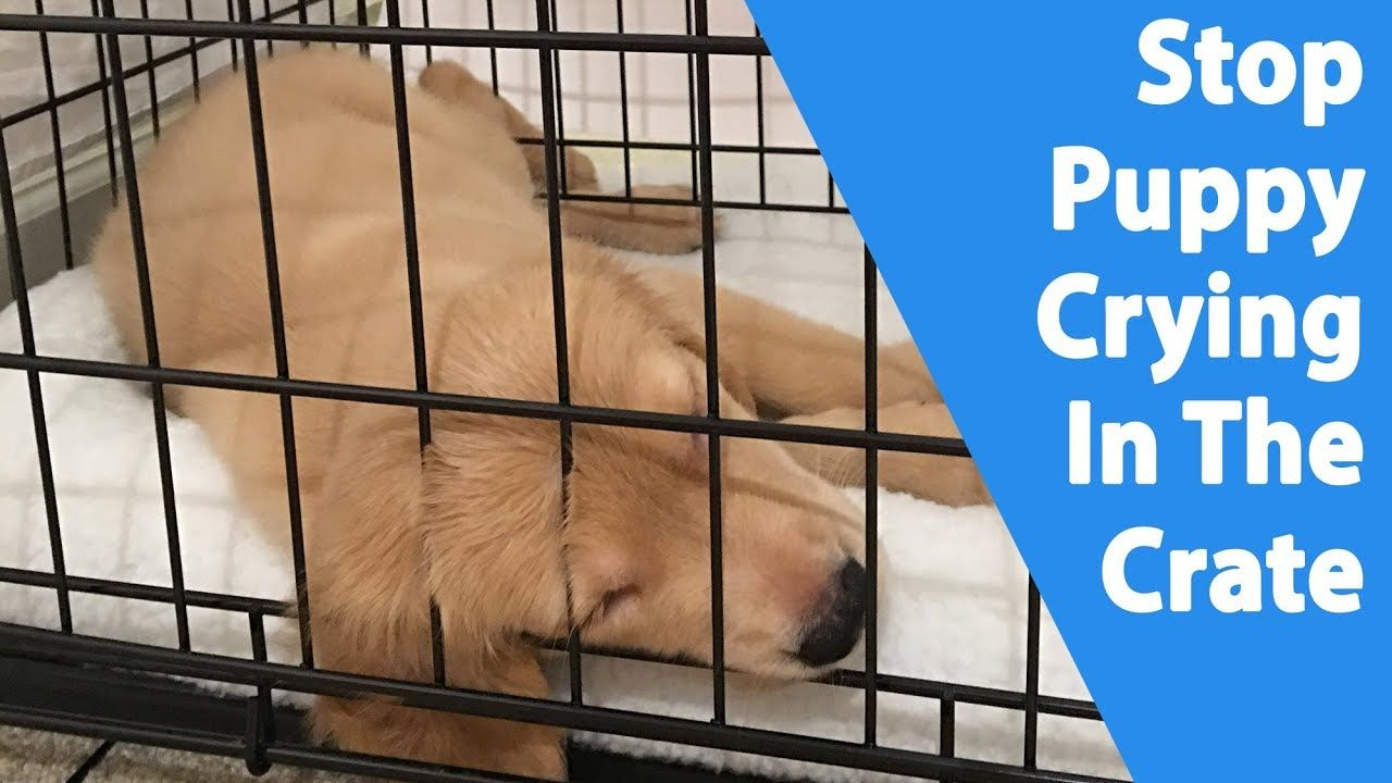 Puppy Crying In The Crate 9 Ways To Stop It Youtube Puppy Whining Puppies Puppy Crate