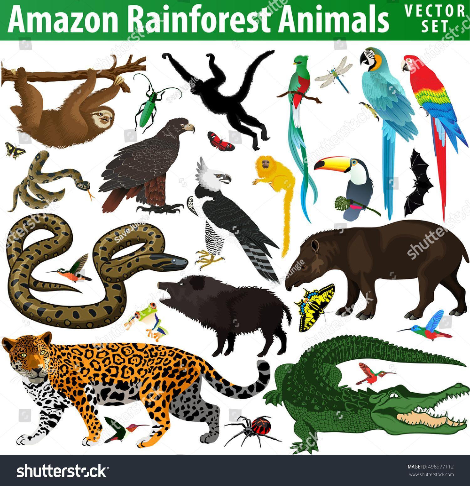 Set Of Vector Amazon Rainforest Jungle Animals Image Vector