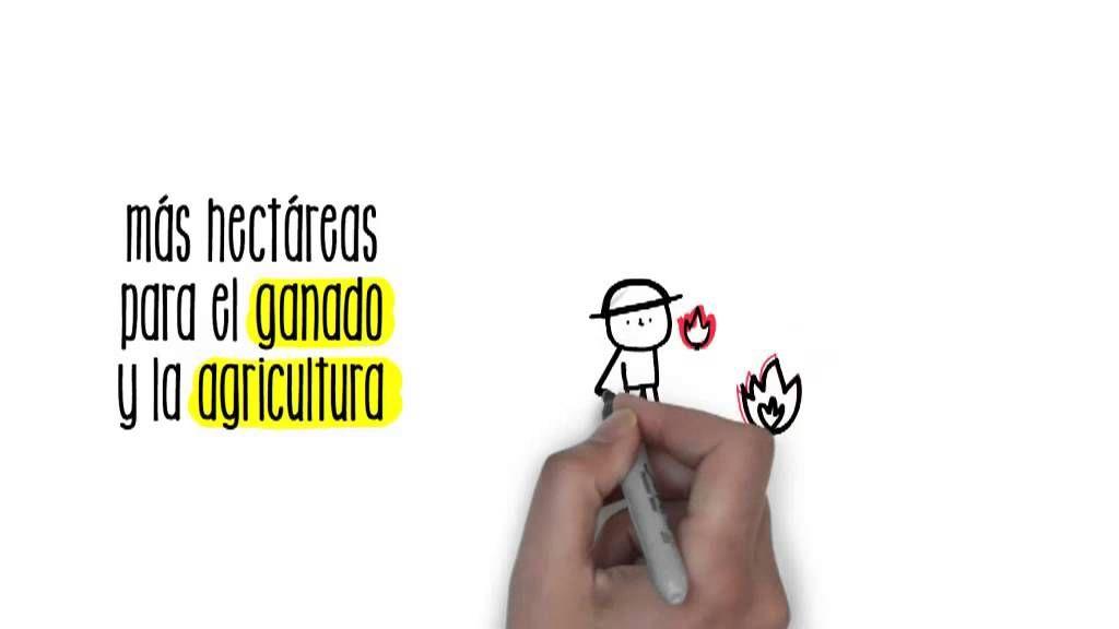 Deforestación | Sostenibilidad