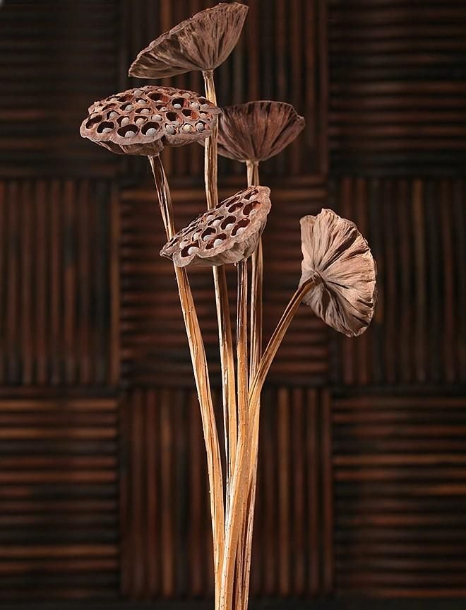 Stemmed lotus pods dried lotus pods natural decor rustic decor flower stemmed lotus pods dried mightylinksfo