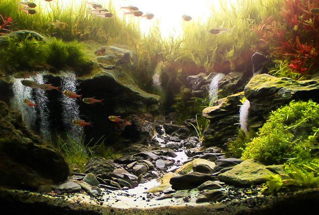 Marcelo Tono Chiovatto S Masterful And Award Winning Work Sunrise In The Valley Is A Hauntingly Beautiful Scene In T Aquascape Aquascape Aquarium The Valley