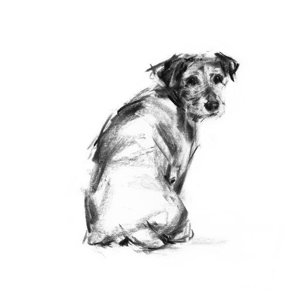 Looking Back Terrier Sketch Print Charcoal Sketch Dog Art Dog