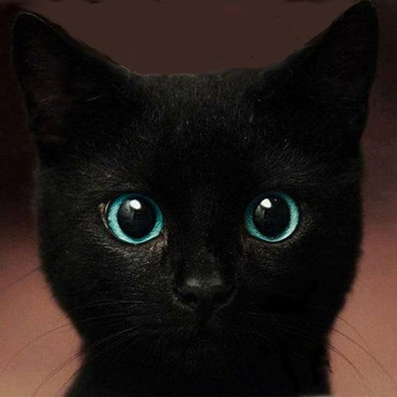Black cat  /  Great gift for anyone who loves cats /   Etsy