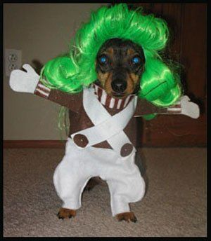 Oompa Loompa Dog Costume With Images Dog Costumes Funny Dog