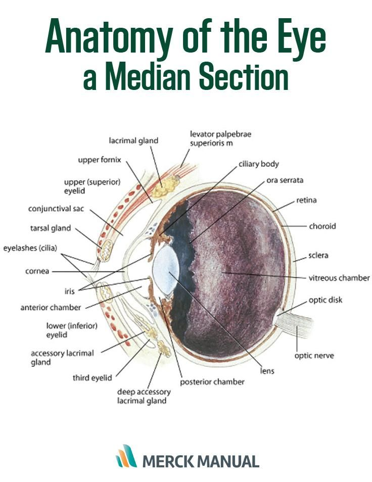 The initial examination of the eye should assess symmetry ...