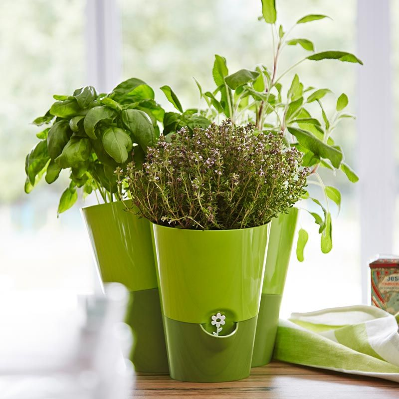 7 Popular Culinary Herbs for Recipes You