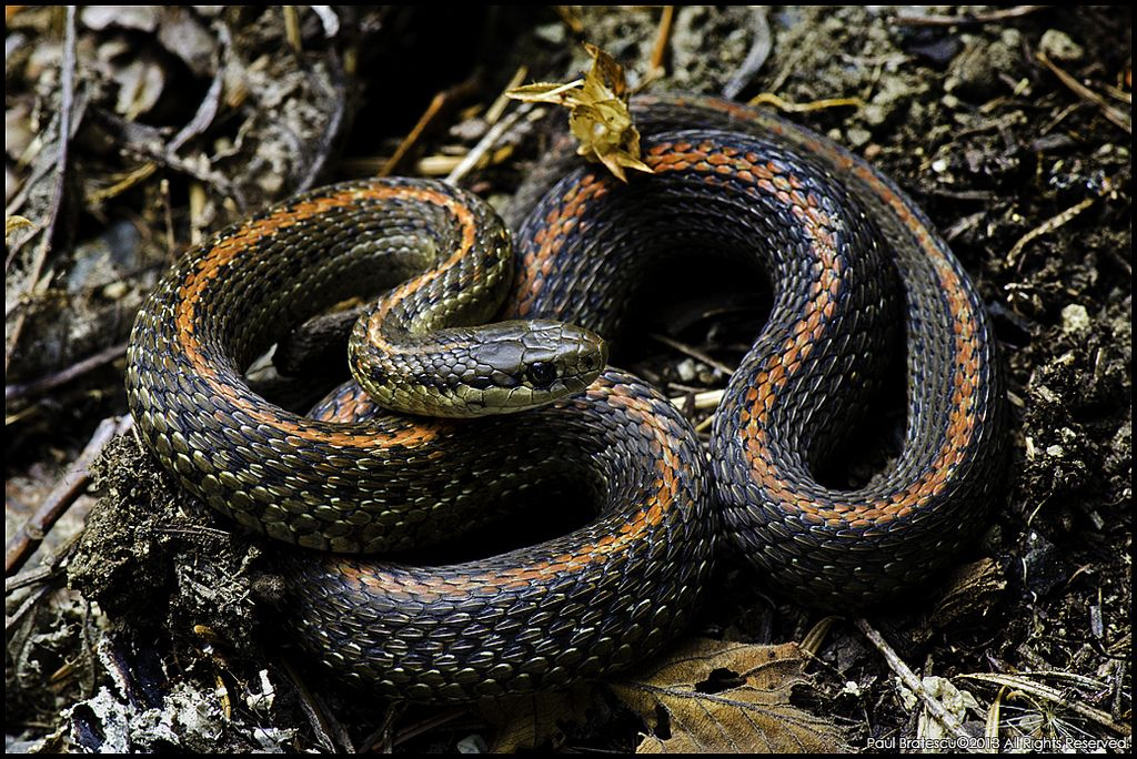 Pin On Beautiful Snakes