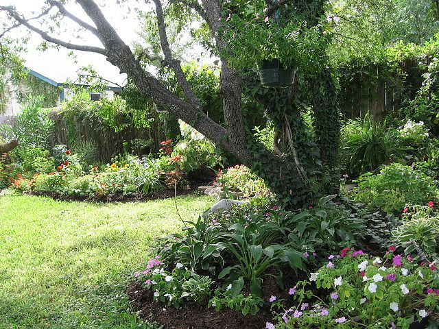 Hosta, impatiens and columbine in shade garden under live oak tree