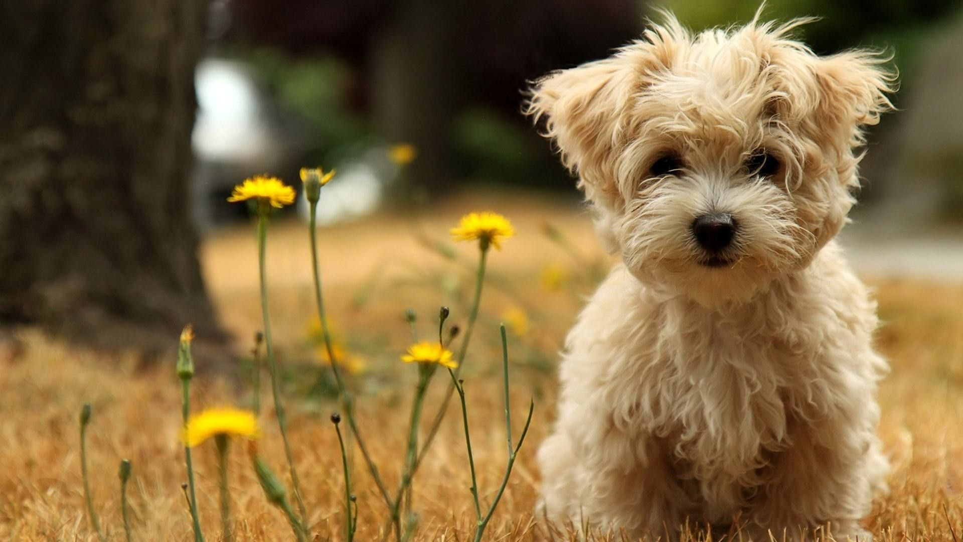 Find Best Latest Wallpapers For Pc In Hd For Your Pc Desktop Background And Mobile Phones Dog Breed Photos Cute Dog Wallpaper Cute Animals