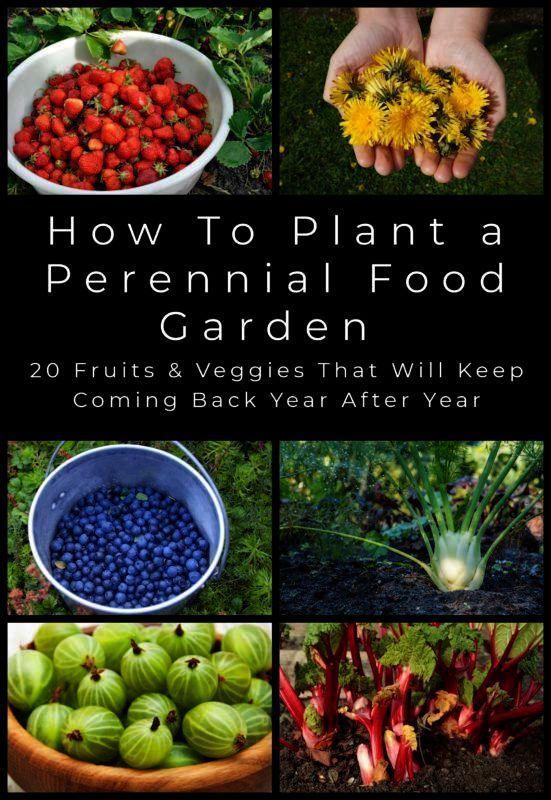 Food Garden Perennial Vegetables Growing Vegetables 400 x 300