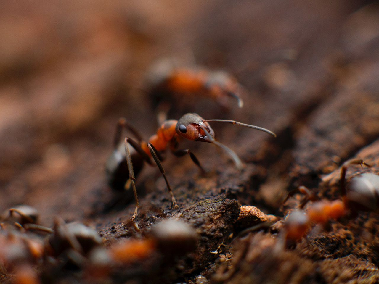 How To Get Rid Of Carpenter Ants In A Camper