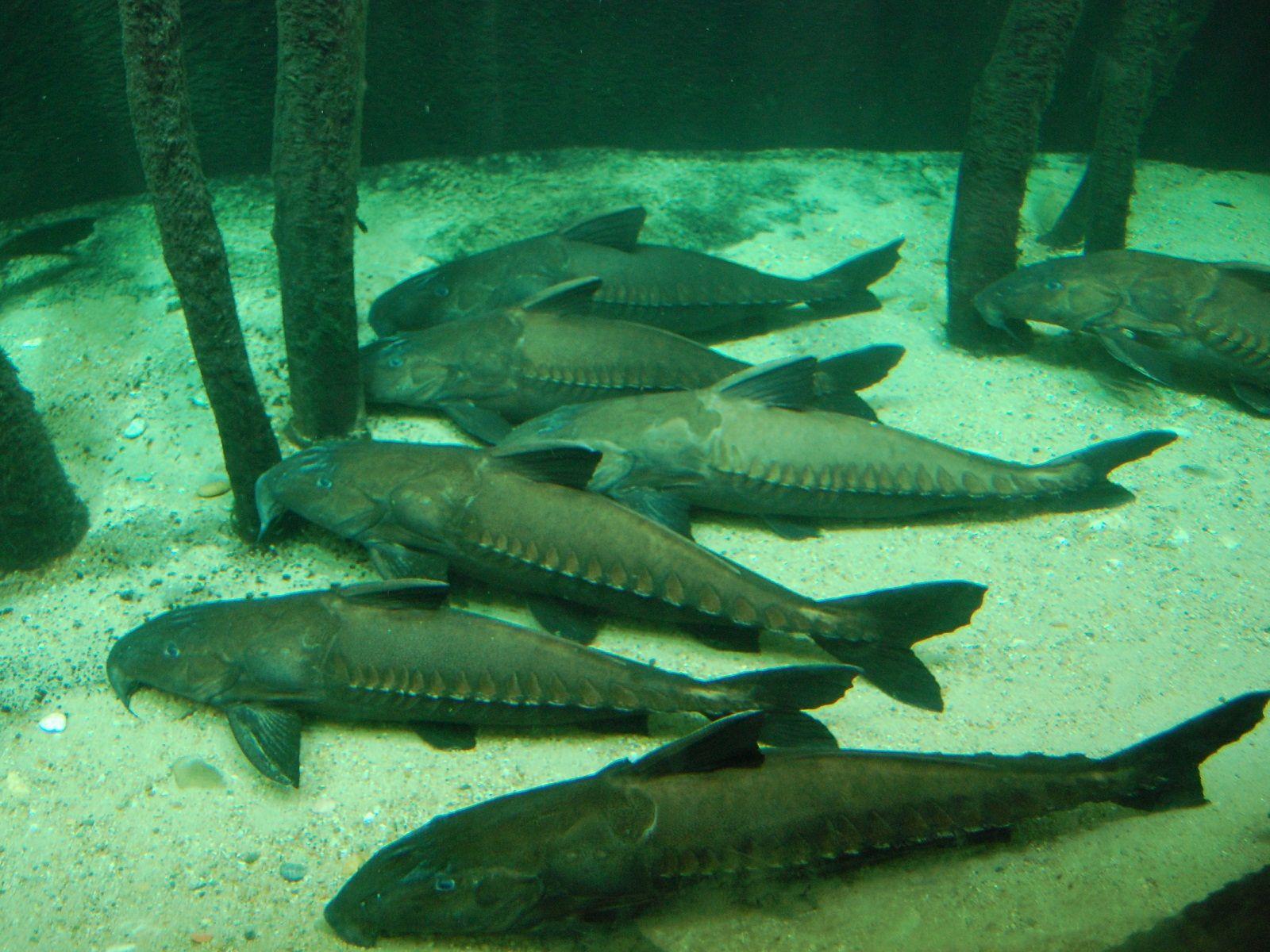 vienna schonbrunn zoo austria aquarium catfish piscatorial love pinterest catfish. Black Bedroom Furniture Sets. Home Design Ideas