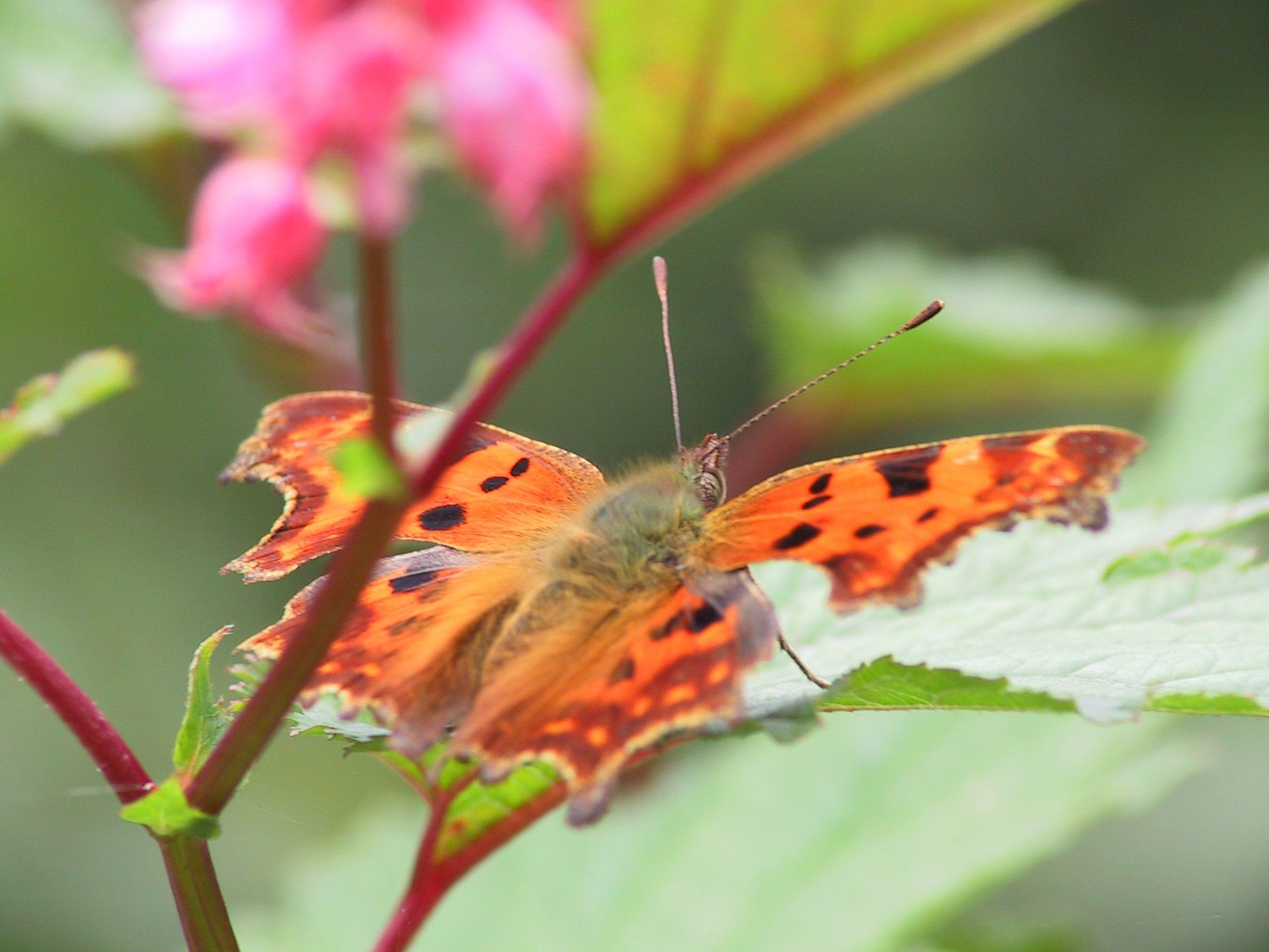 "So many great Butterflies in the garden ""De Bloementuin"" in Holland. #Ecological Gardening. #Colourfull Garden. #De Bloementuin in Holland."