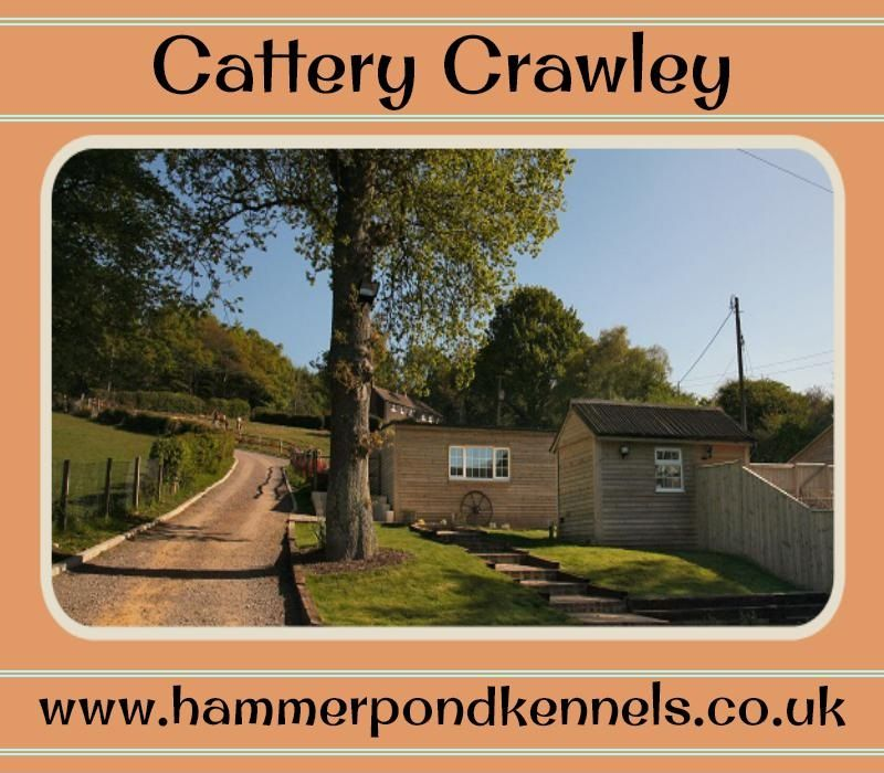 For more information visit at: http://www.hammerpondkennels.co.uk/nav/cattery