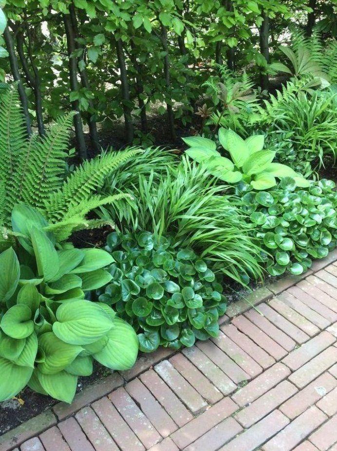 Asarum Bootfahren Hakonechloa Und Husten Shadow Ridge Asarum Hakonechloa Hoesten Schaduwrand V Gart In 2020 Shade Garden Design Shade Plants Shade Garden