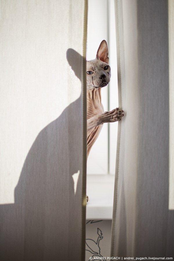 The Crypt Keeper Creeper Sphynx Cat Here Kitty Kitty Art