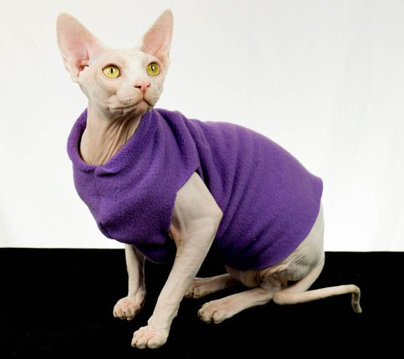 Cat Clothes, Cat Shirt, Sphynx cat clothes, Purple Amethyst Cat ...