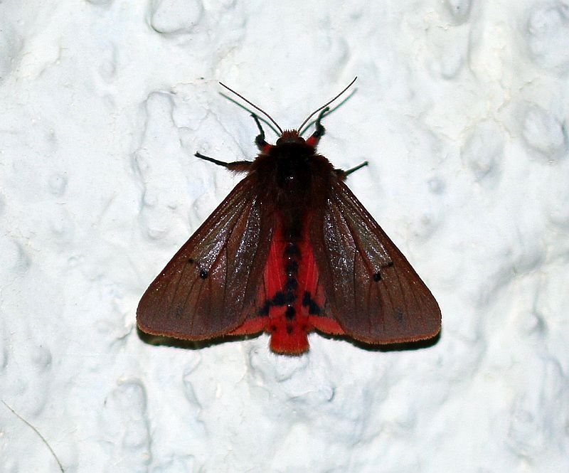 In Deutschland Gibt Es Uber 3700 Arten Von Schmetterlingen In Form Von Tagfalter Nachtfalter Und Kleinschmetterlinge Die A In 2020 Nachtfalter Schmetterling Insekten