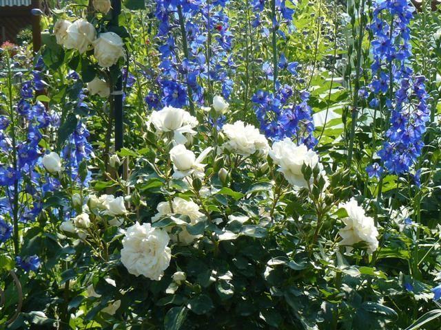 Foto Mein Schoener Garten De http mein schoener garten de jforum posts list 2206001 page