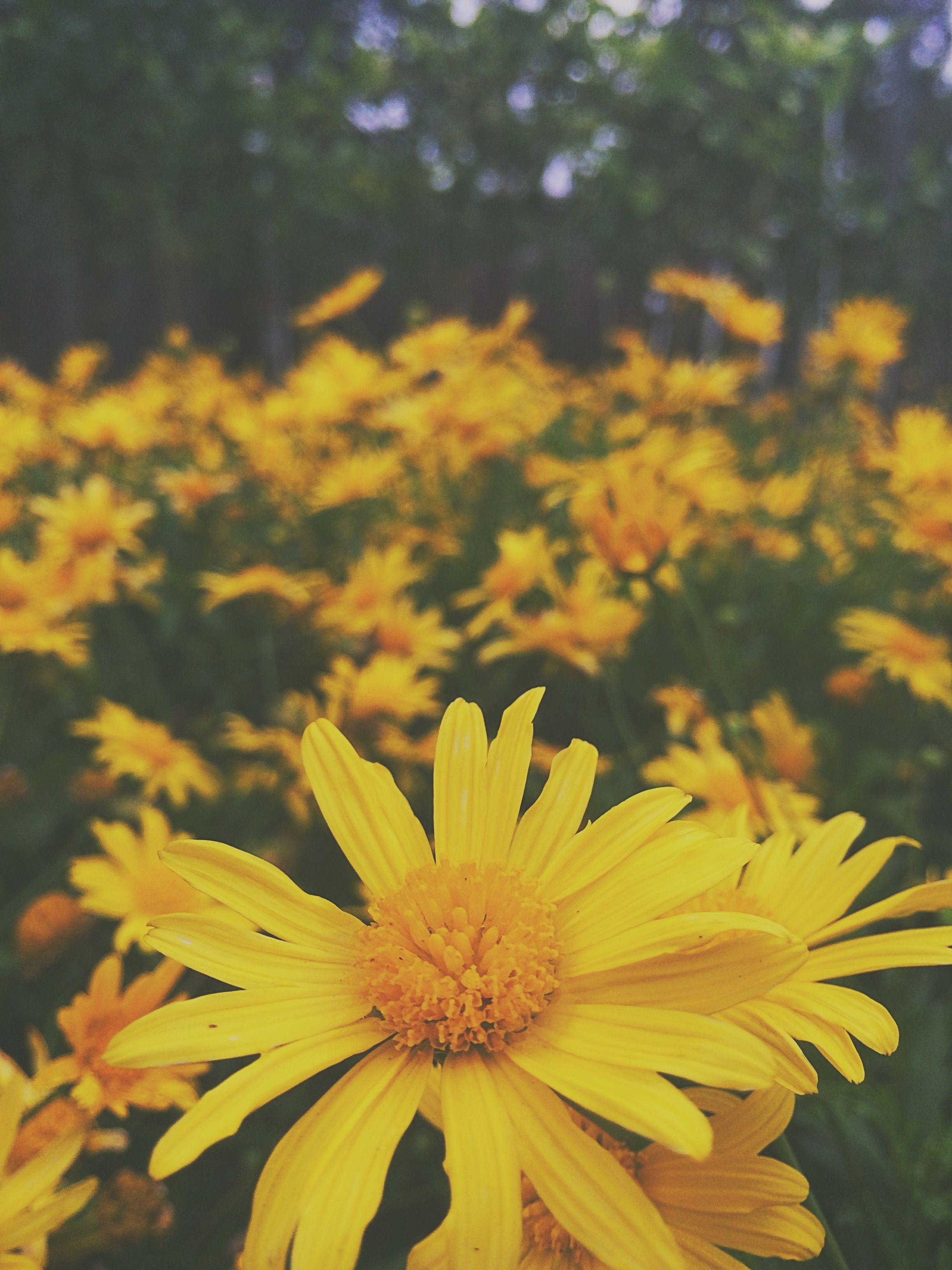 Grunge Hippie Shadow Dark Yellow Flowers Wanderlust Background