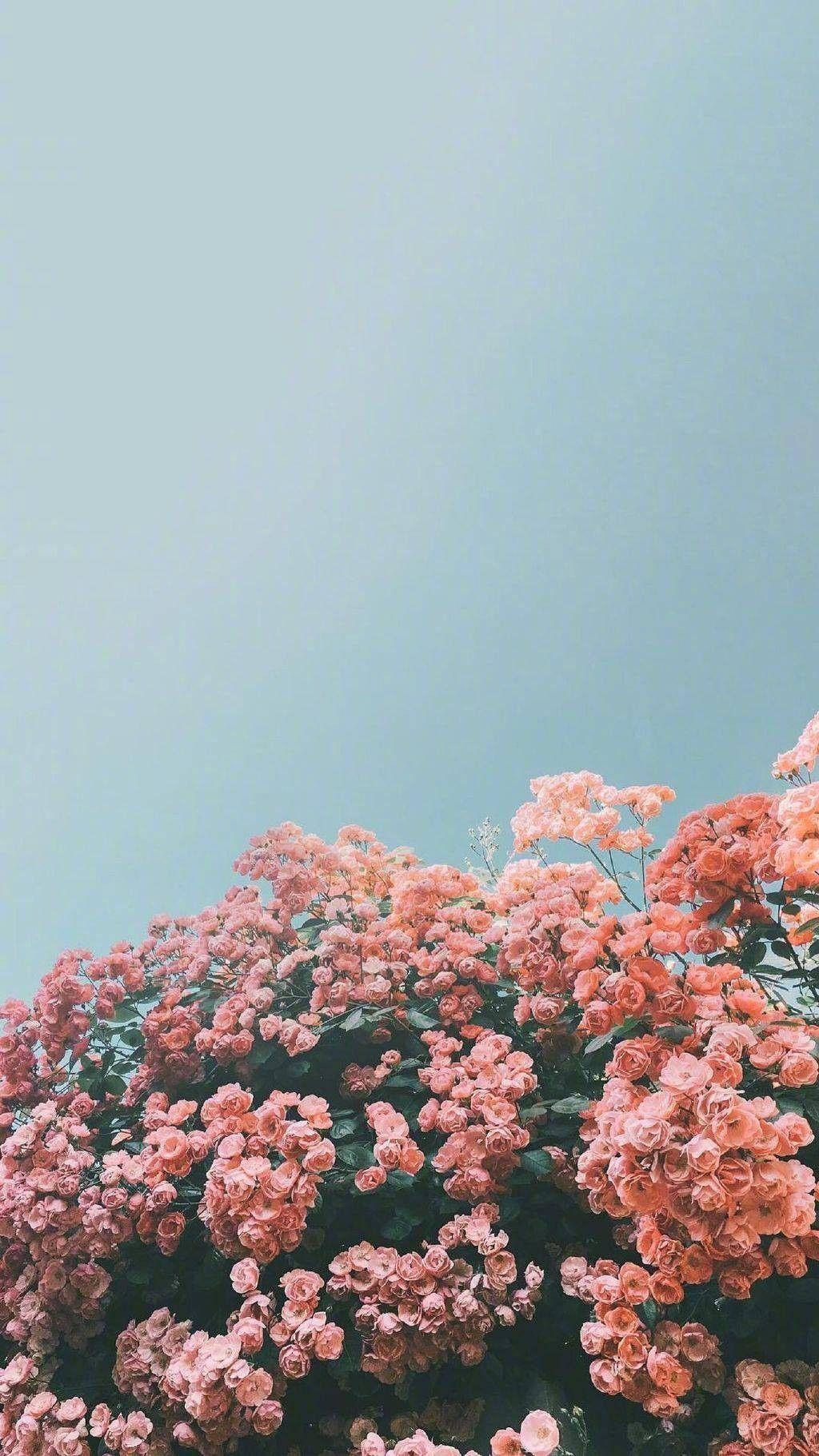 𝚙𝚒𝚗𝚝𝚎𝚛𝚎𝚜𝚝 𝚔𝚊𝚕𝚎𝚢𝚑𝚘𝚐𝚐𝚕𝚎 ☆ 𝚟𝚜𝚌𝚘 𝚔𝚊𝚕𝚎𝚢𝚑𝚘𝚐𝚐𝚕𝚎 ☆ Flower