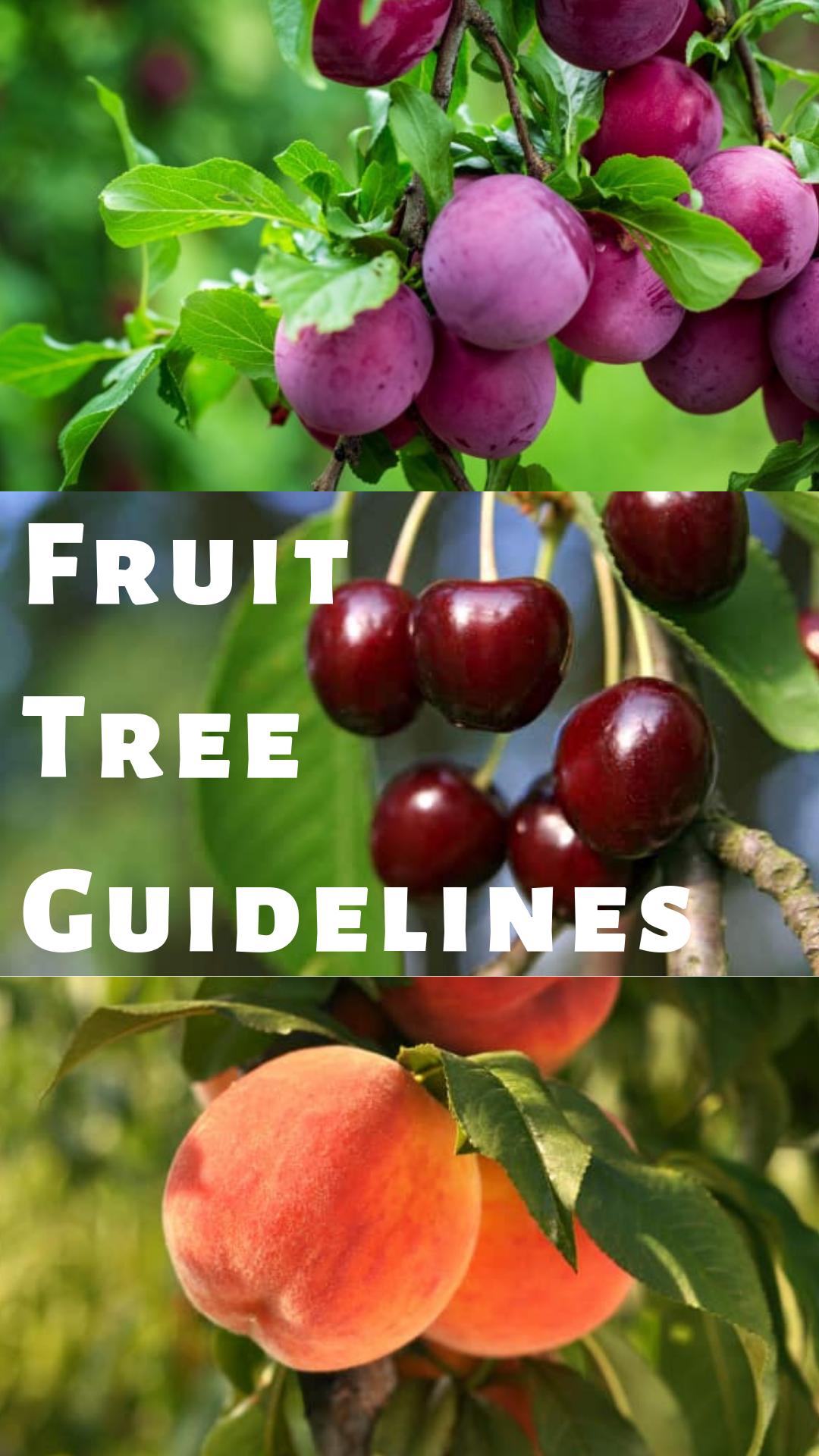 Fruit Tree Guidelines Fruit Trees Pruning Fruit Trees Plum Tree