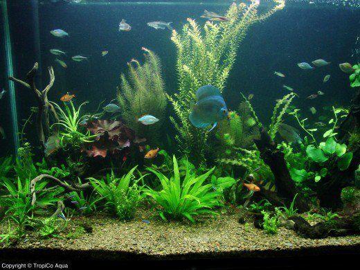 How To Choose Compatible Fish For Your Community Aquarium Community Fish Tank Tropical Fish Aquarium Tropical Fish Tanks