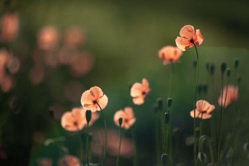 prettylittleflower