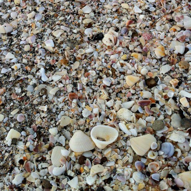 Shells on Englewood Beach   Englewood beach, Beach town ...