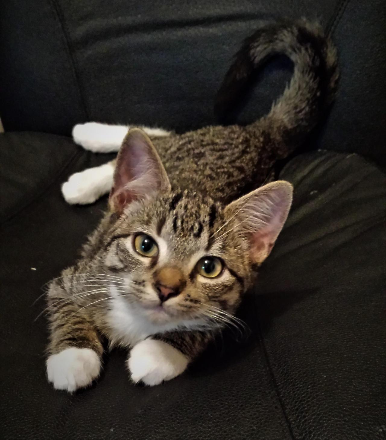 Your Ultimate Kitten Development Guide Gatti Cani