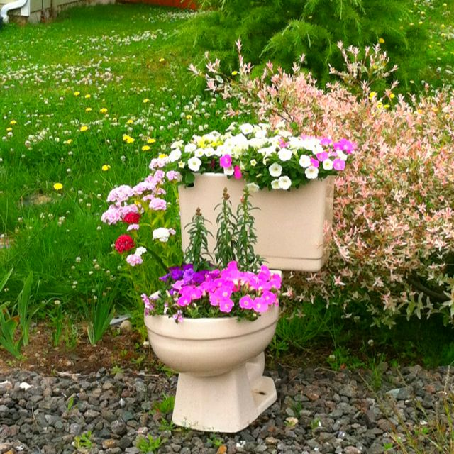 Foyer Planters : Toilet bowl flower pot only bernie s is yellow and right