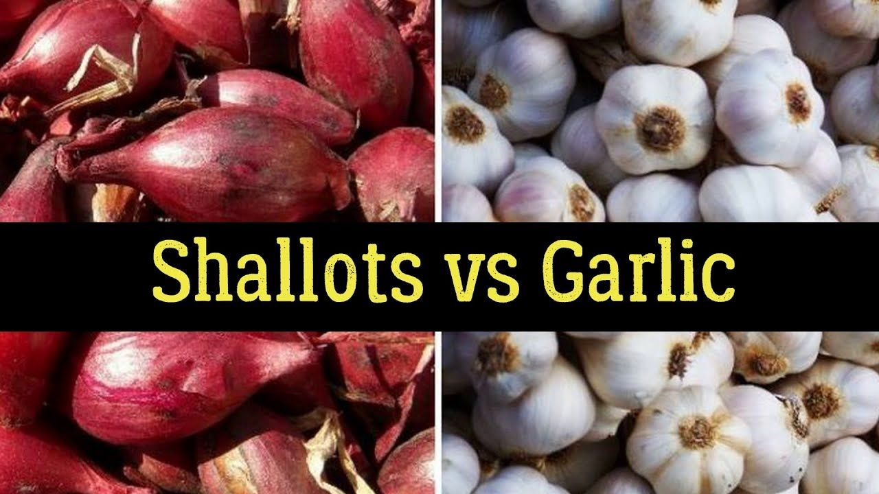 shallots vs garlic - health benefits & nutrition facts