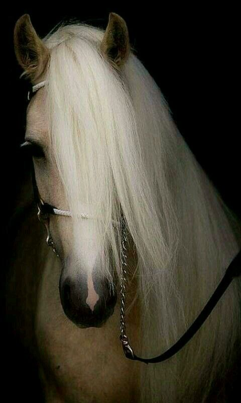 Huzur Sokagi Yasamaya Deger Hobiler Image Cheval Photographie Equestre Beaux Chevaux