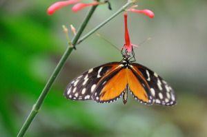 """Diese wunderbare Geschichte vom Schmetterling zeigt so deutlich, wie wichtig Herausforderungen für unser Leben sind. Persönliches Wachstum passiert immer, wenn wir Hindernisse erfolgreich überwunden haben. """"Bewältige eine Schwierigkeit, und du hältst hundert andere dir fern."""" (Konfuzius)"""