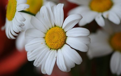 daisy, daisy, give me your answer do