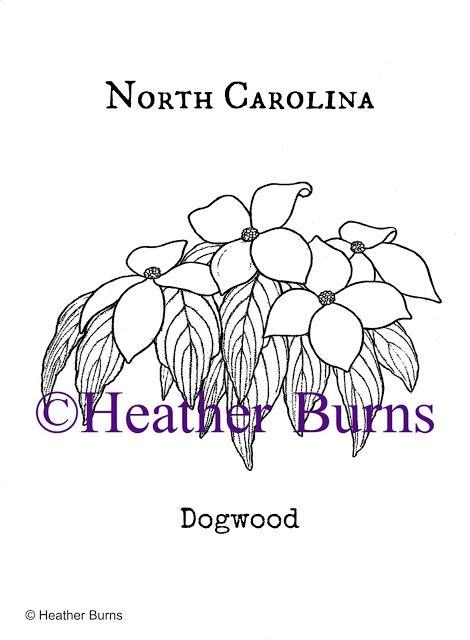 North Carolina State Flower: Dogwood
