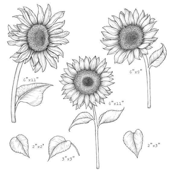 Sunflower Transparent PNGs - Sunflowers Clip Art -