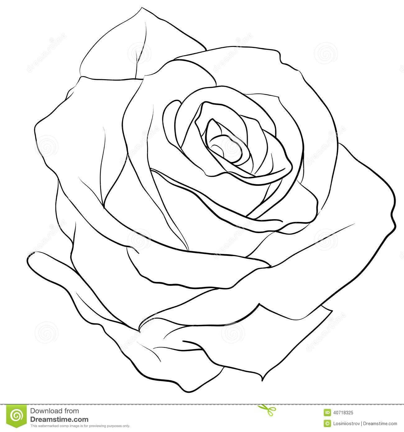 Pin By Rikard Wallin On Roses Rose Outline Rose Drawing Roses Drawing
