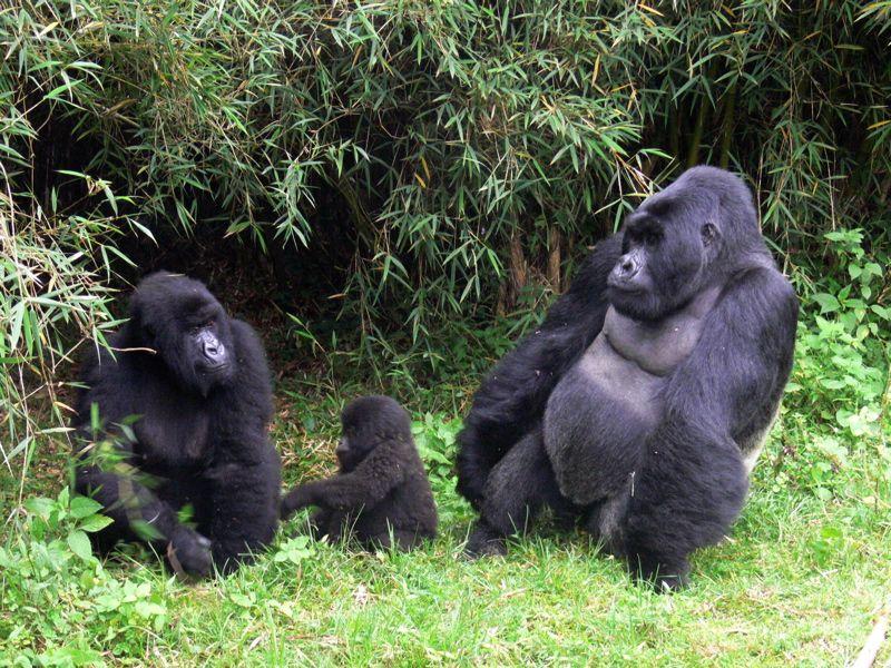 Safari et animaux, Ouganda