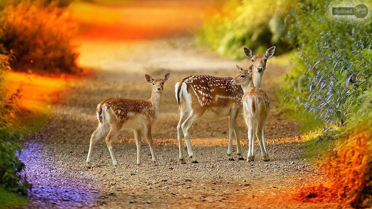 Deer Desktop Wallpaper Pictures Deer wallpaper, Deer