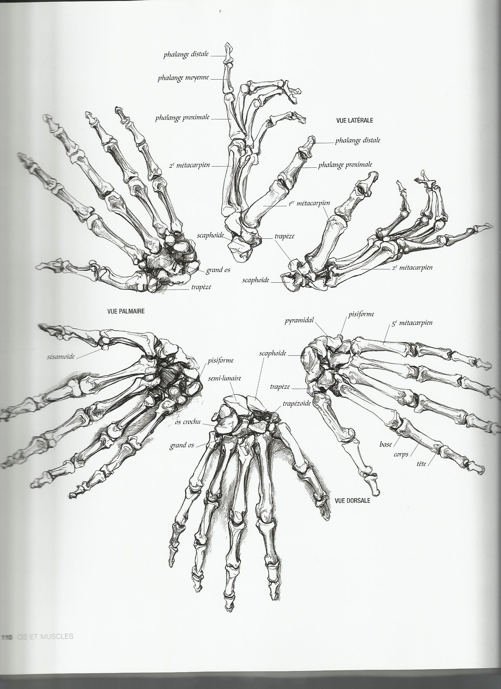 Pin by Katty W on Anatomy Skeleton hands drawing
