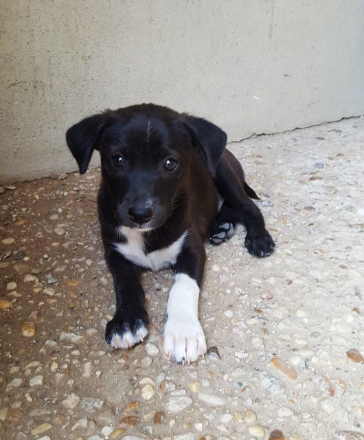 4 Cachorritos Que Nos Dejaron Este Mes A Las Puertas Del Refugio Contactar Directamente Con La Protector Perros En Adopcion Adopción De Perro Adoptar Un Perro
