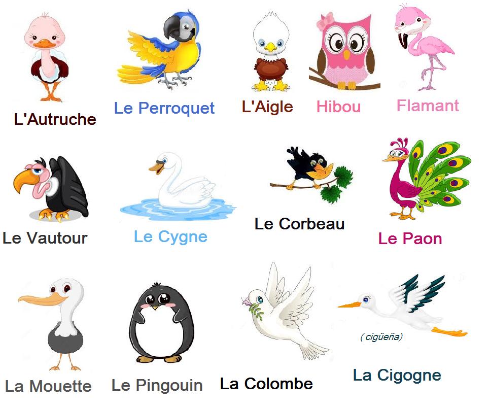 Ptaki - słownictwo 3 - Francuski przy kawie