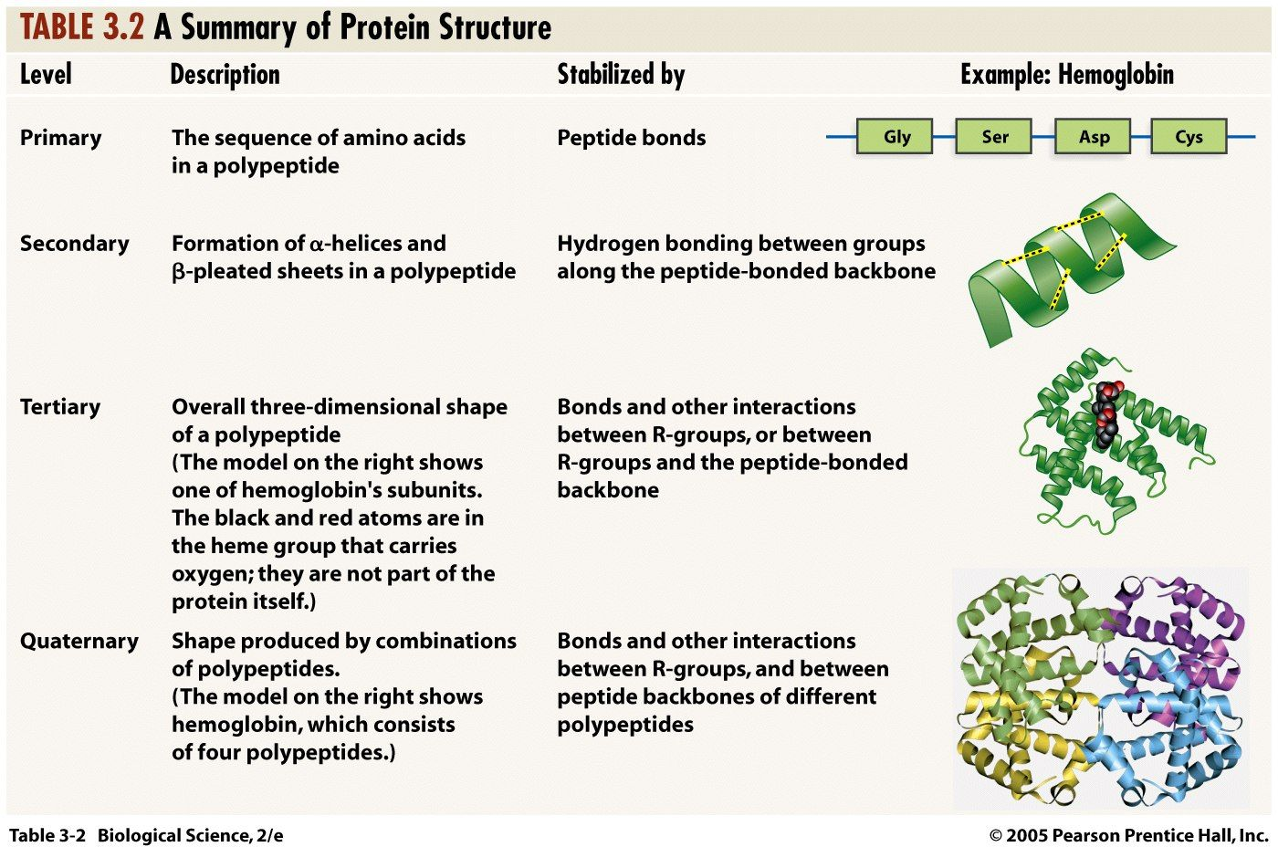 Structure Of Protein Google Search Biochemistry Pinterest