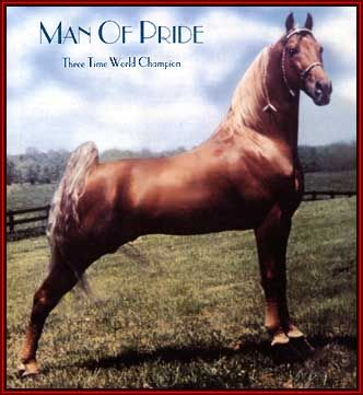 man of pride tennessee walking horse three time world champion horses pinterest. Black Bedroom Furniture Sets. Home Design Ideas