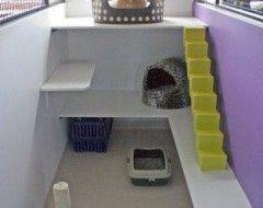 Market Bulletin Animal Room Cat Room Pet Boarding