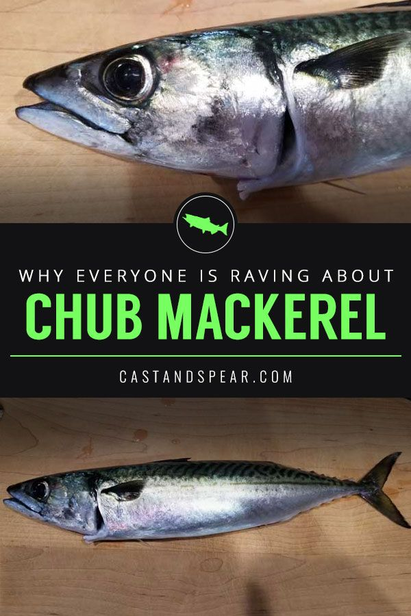 Why I Don T Consider Chub Mackerel A Trash Fish With Images