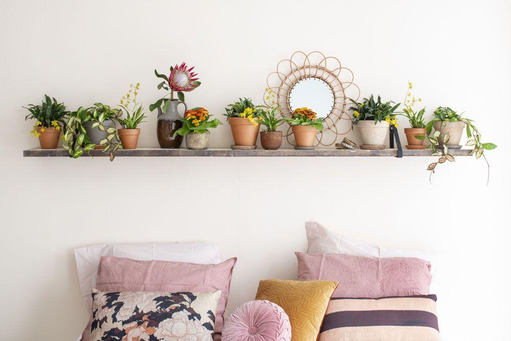 Blühende Schönheiten für drinnen: Mini-Orchideen