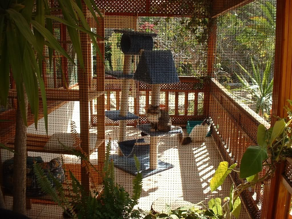 Diy cat enclosures on pinterest cat enclosure outdoor for Diy garden room